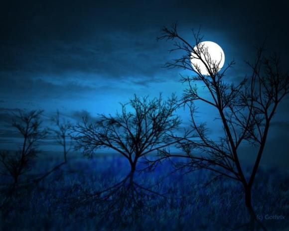 Full_Moon_____Midnight_Forest_by_Gothrix