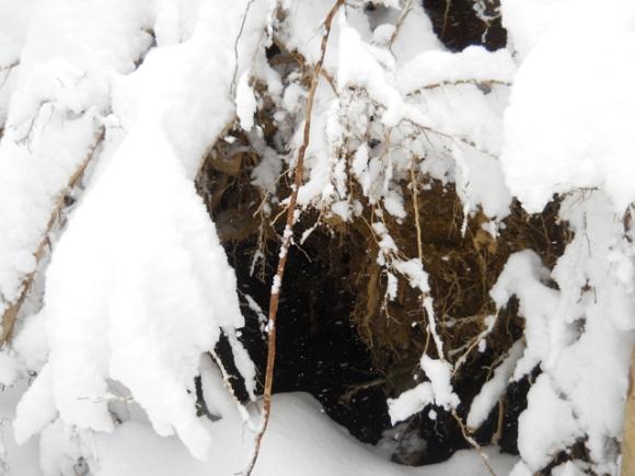 Cave_Snow_3_8_13