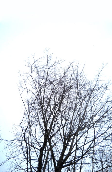 Sky and Trees_3_8_13_small