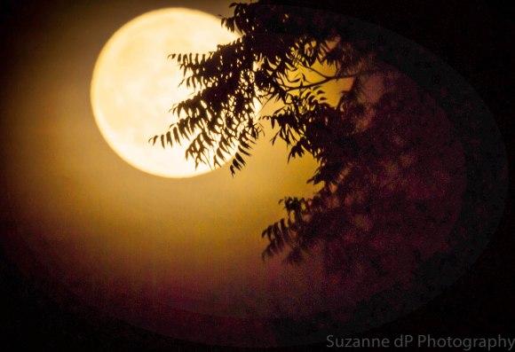 moon_harvest_2-29-2012_Oregon_Suzanne_Dos_Passos