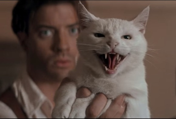 Mummy_Cat_Hiss