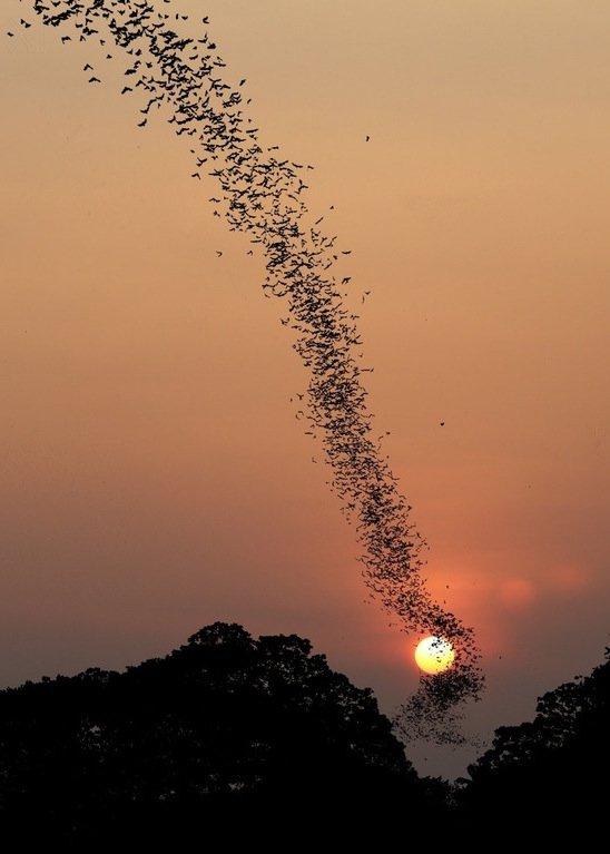 bats-flying