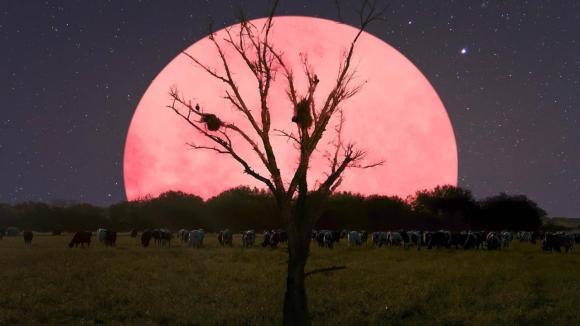 moon-night-supermoon-trees-2234731-1